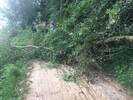 Neckartalradweg wegen Windbruch kurzzeitig nicht befahrbar